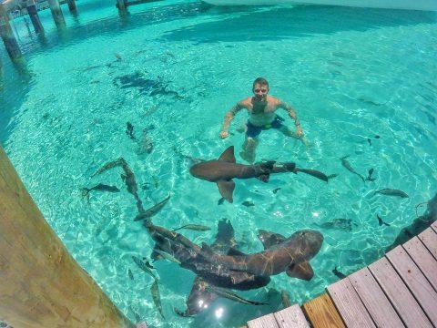 Nassau: Exumas, Pig Beach, & Independence Day Travel Guide